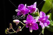 Come curare le orchidee: consigli pratici per tutti!