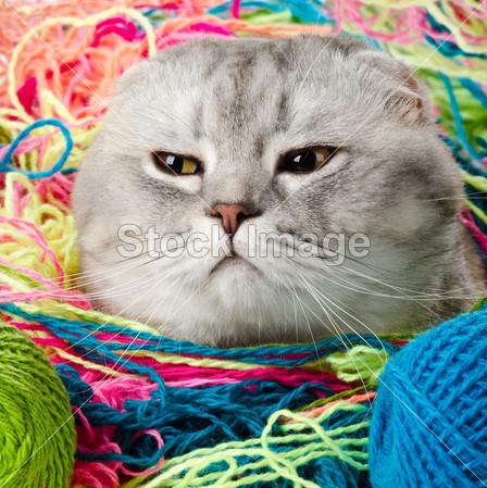 Le malattie del gatto anziano: 5 cose da sapere