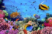 Allestire un acquario: consigli utili per esperti e non