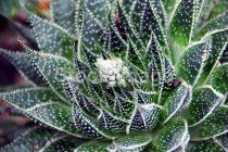 Piante da interni: come prendersi cura delle piante grasse