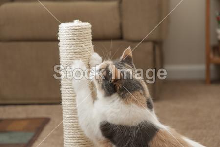 Come insegnare a usare il tiragraffi al gatto, salvando il divano